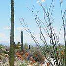 Beauty of the Sonora Desert © by jansnow
