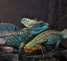 Male & Female Basilisk by Winston D. Munnings