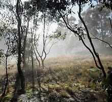 Misty Morning Light, Killimicat,Tumut, Australia. by kaysharp