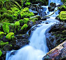 Bridge Falls  by Don Siebel