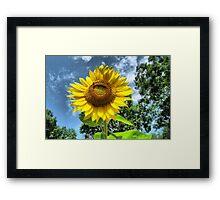 You Are My Sunshine ~ Make-A-Wish-Sunflowers Framed Print