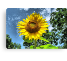 You Are My Sunshine ~ Make-A-Wish-Sunflowers Canvas Print