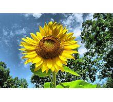 You Are My Sunshine ~ Make-A-Wish-Sunflowers Photographic Print