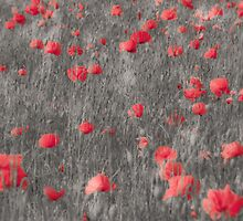 Poppy II by Scott Anderson