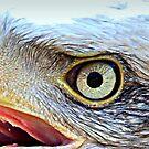 Eagle Eyed by naturelover