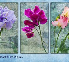 Sweet-peas  by Susie Peek