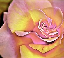 Rose in Pastel colours.  by Renate  Dartois