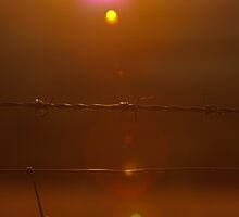 barb wire at sunset by Matt Sillence