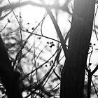 Light & Mist  Through The Trees by Evita