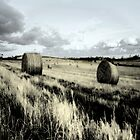 a roll in the hay by alan bell