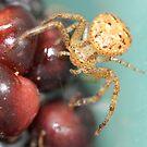blackberry spider by katpartridge