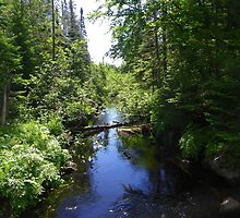 Greenwood Stream - Danforth, Maine by MaryinMaine