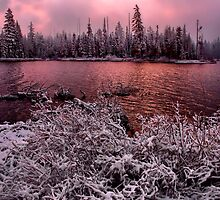 Lets Get Real by Charles & Patricia   Harkins ~ Picture Oregon