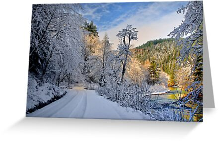 Santiam Wagon Road Delight by Charles & Patricia   Harkins ~ Picture Oregon