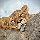 Lioness at rest  by cnysmile