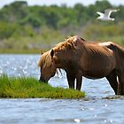 Staying Cool by Monte Morton