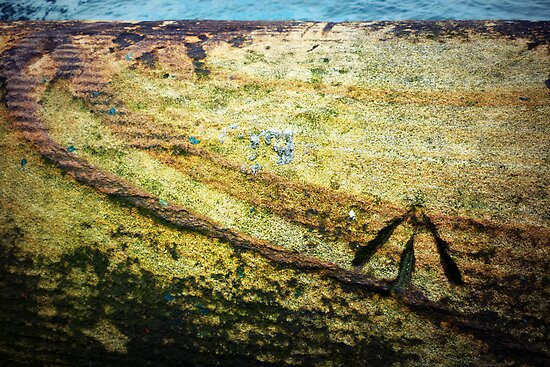 sydney harbour: convict's mark by greg angus