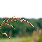 Long Grass in the Breeze by Dannielle Levan
