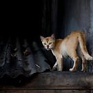Cat on a Cold Steel Roof by Chris Westinghouse