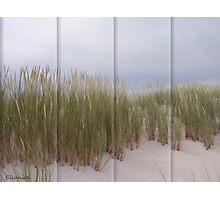 Swaying in the sand  Photographic Print