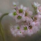 Bergenia Enhanced by Dianne English