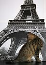 Kitten in Paris!!! by Jo Nijenhuis