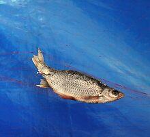 Netfish. II by Bluesrose