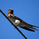 Bird on a Wire by Tanya Rossi