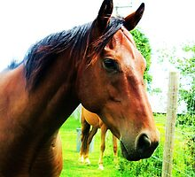 Headshot of a Thoroughbred by RachelH