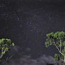 Nighttime, Queensland Bush by Dean Bailey