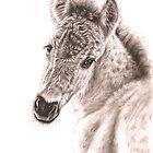 Wildhorse Foal by Nicole Zeug