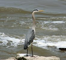GOOD DAY TO CATCH FISH by Brenda Planchon