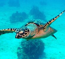 Floating turtle by sergioms1