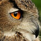 Eye of the Eagle Owl. by Mark Hughes