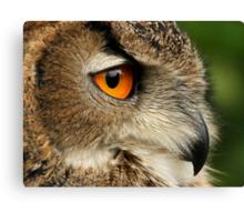 Eye of the Eagle Owl. Canvas Print