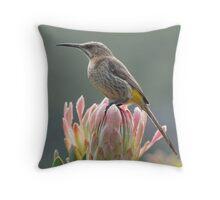 Sugarbird on Protea Throw Pillow