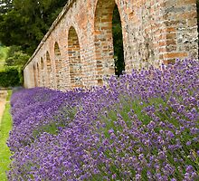 Lavender walled garden. by sandyprints