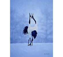 Red Crowned Crane Photographic Print