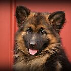 Queena - German Shepherd Puppy by Sandy Keeton