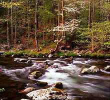 SPRING ALONG LITTLE RIVER by Chuck Wickham