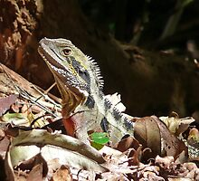 Forest Lizard on the Gold Coast, Queensland. by Leonie Mac Lean