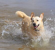 harley she just loves water by gene mcfarland