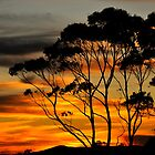 Hilltop sunset by vilaro Images