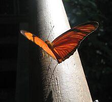 orange wings - iguazu falls by Angeloid
