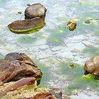 beach rocks by SUBI