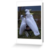 One of us has to get off !!! Greeting Card