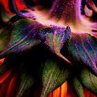 sunflower power  by marysia wojtaszek