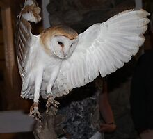 Arrow the ghost barn owl by leunig