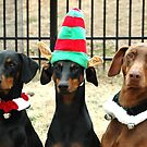 Dobermans of December by Leslie Bird Nuccio