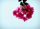 Hanging bouquet by Themis